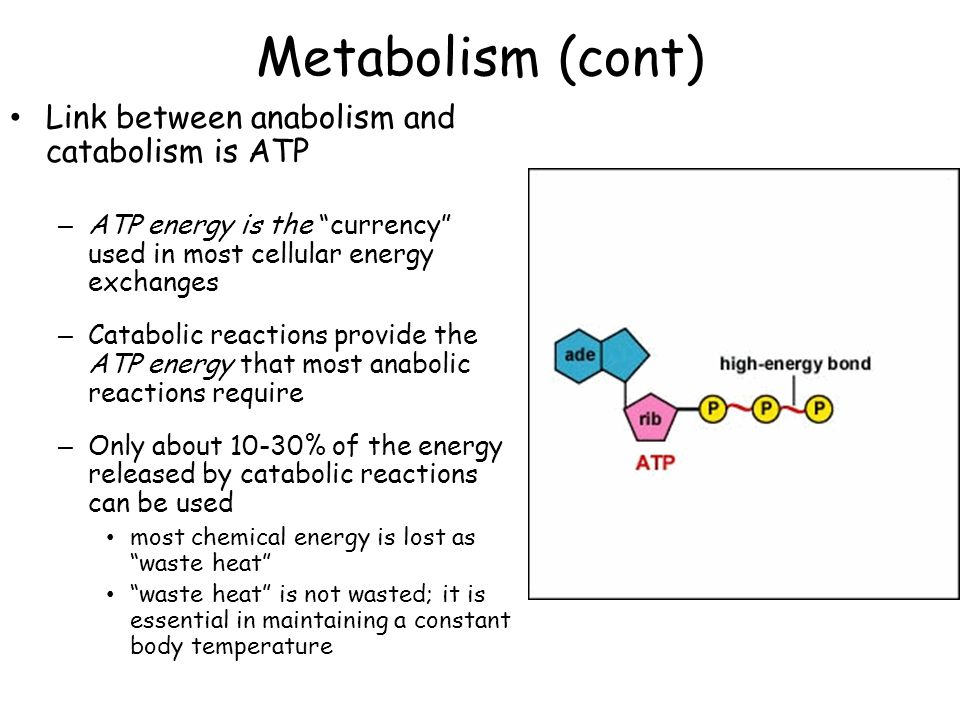 what is the relationship between metabolism and energy