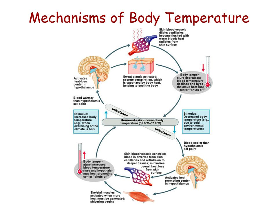 Nutrition, Metabolism and Thermoregulation - ppt video ...