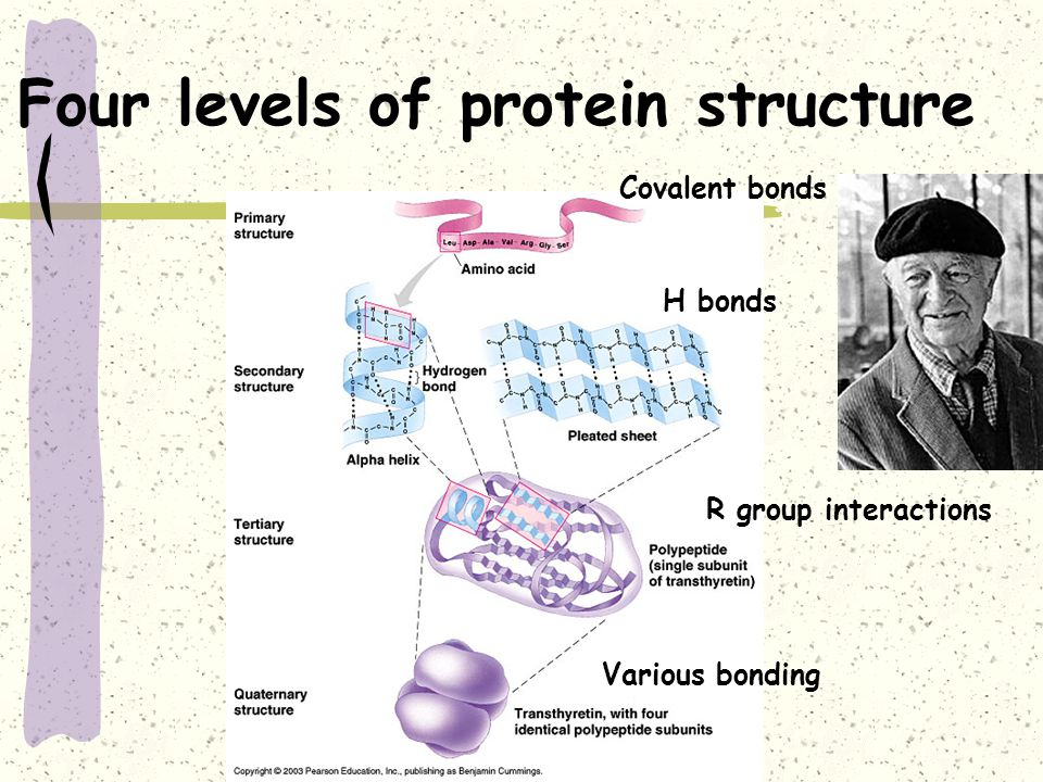bovine spongiform encephalopathy biochemistry In scientific circles the disease is better known as bovine spongiform encephalitis, or bse  central dogma of biochemistry that only change in nucleic acid .