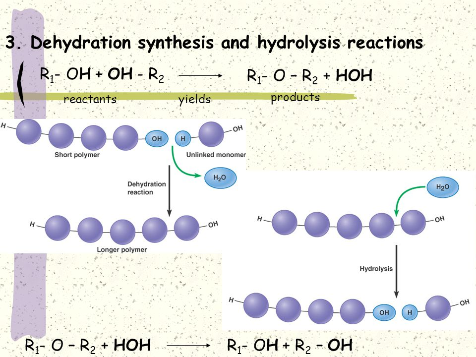 dehydration synthesis and hydrolysis Dehydration synthesis vs hydrolysis dehydration synthesis vs hydrolysis - these processes are complete opposites as they exist throughout nature and are vital to how bio-molecules are formed with water through these processes are how all the bio-molecules are established and disestablished.