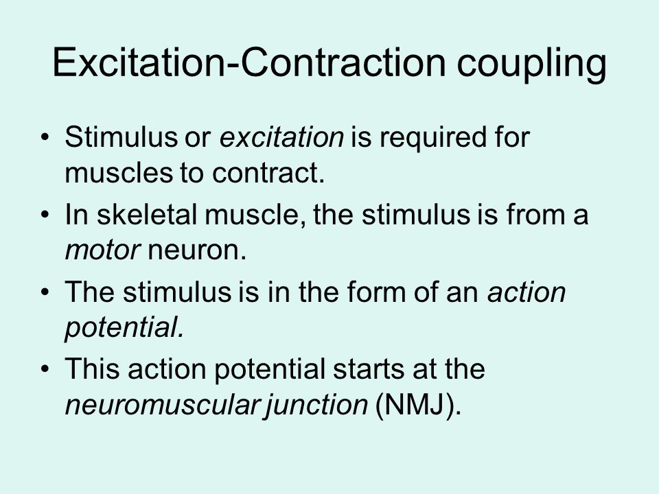 outline the differences between the excitation contraction What are the differences between the three types of human muscles  stem the differences between skeletal, smooth & cardiac muscles updated on december 4, 2015 ccahill more descriptions and examples of the three types of muscles in the human body three types of muscles found in the human body  • are capable of powerful.