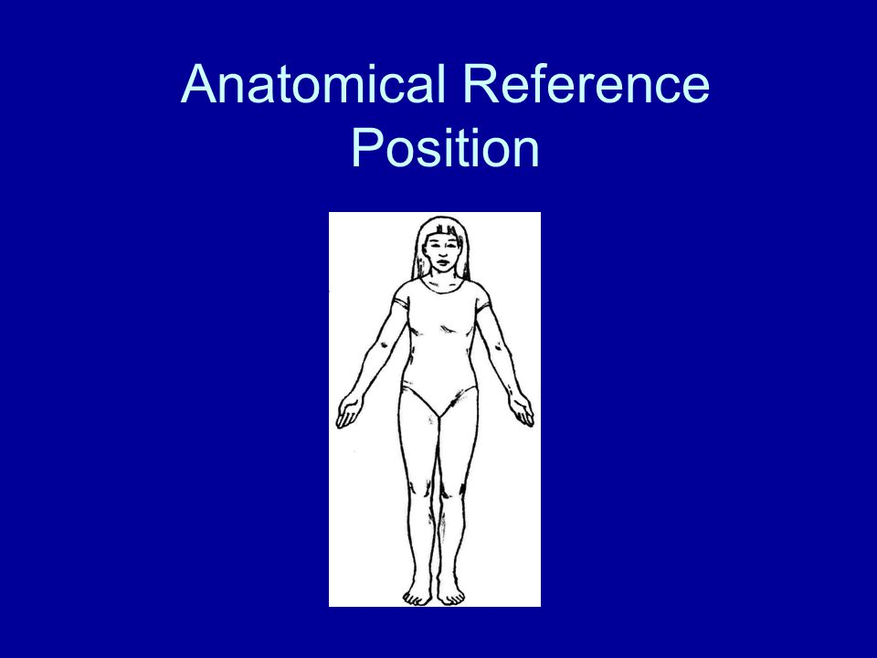 Anatomical Reference Position