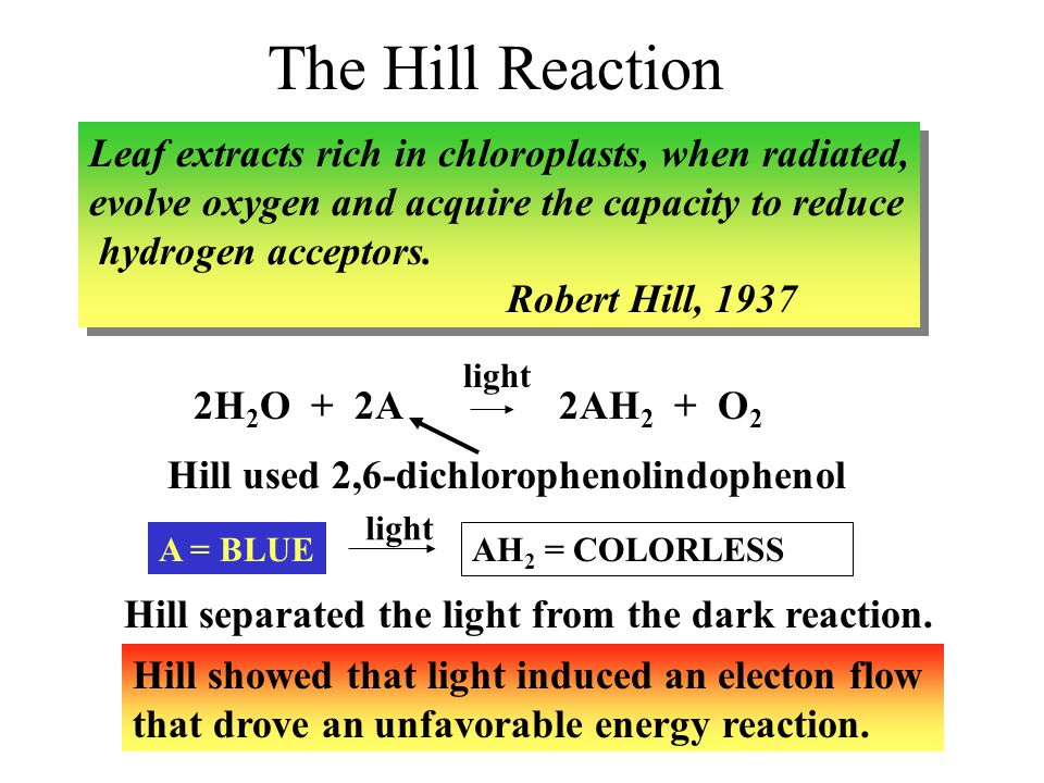 hill reaction The hill equation, which was originally formulated by archibald hill in 1910 to  are the reaction rate constants for the association of the ligands to the .