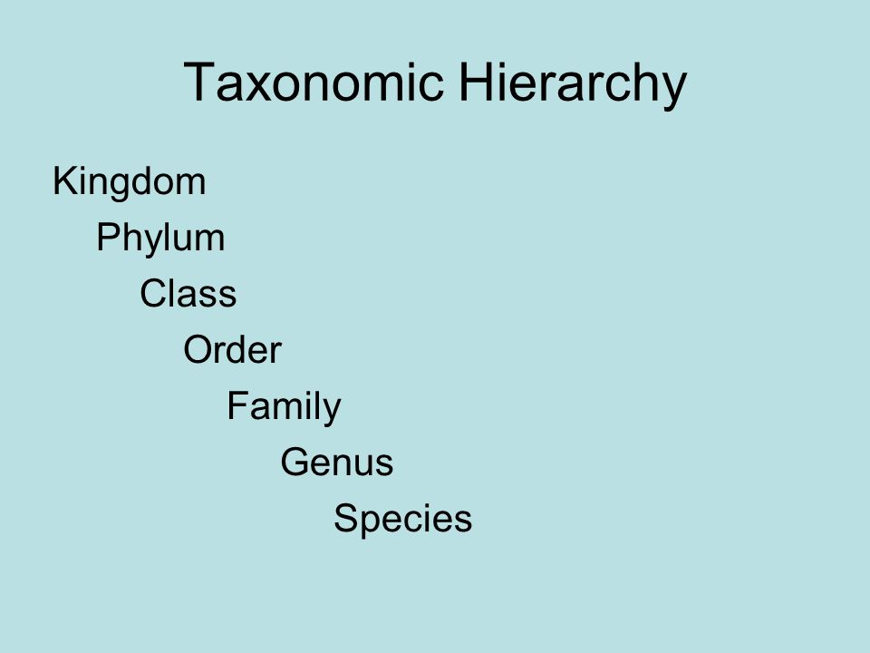 Taxonomic Hierarchy Kingdom Phylum Class Order Family Genus Species