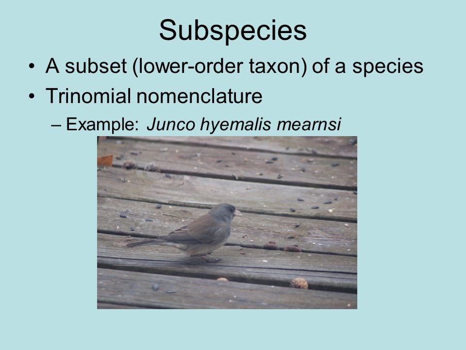 Subspecies A subset (lower-order taxon) of a species
