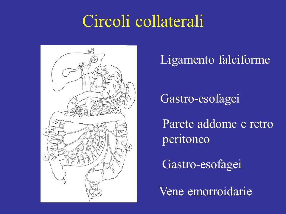 Circoli collaterali Ligamento falciforme Gastro-esofagei