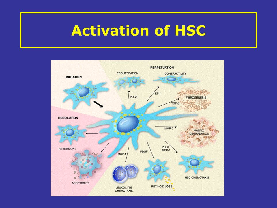Activation of HSC