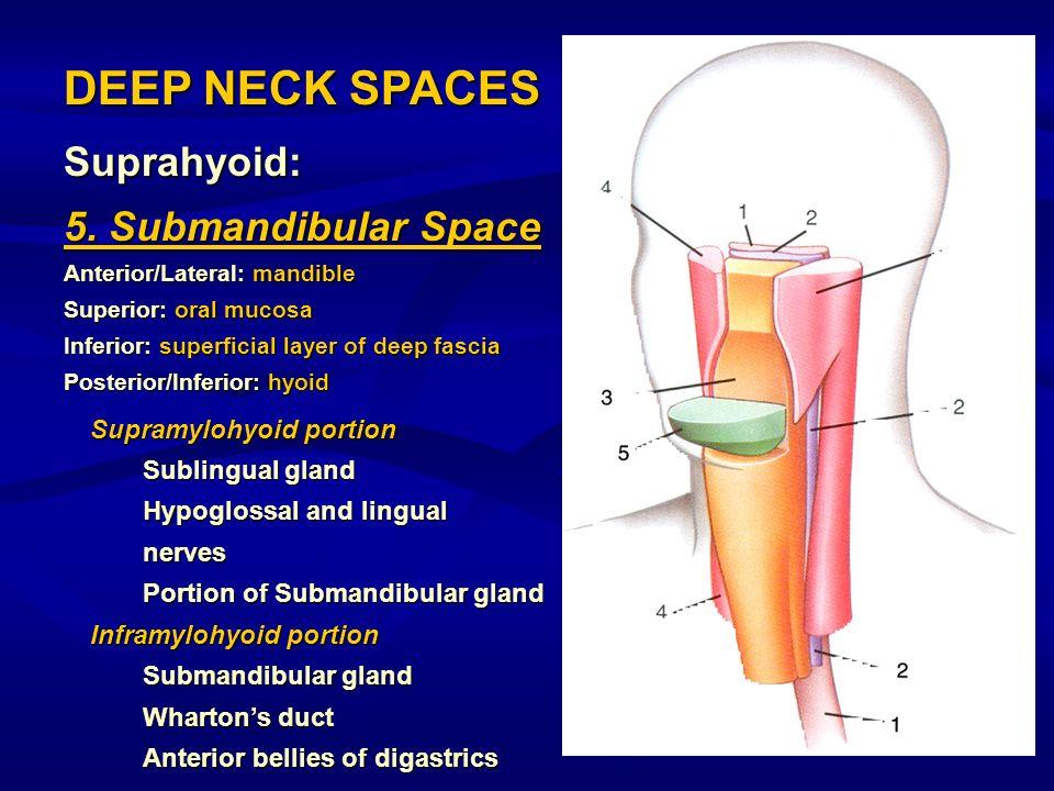 DEEP NECK SPACES Suprahyoid: 5. Submandibular Space