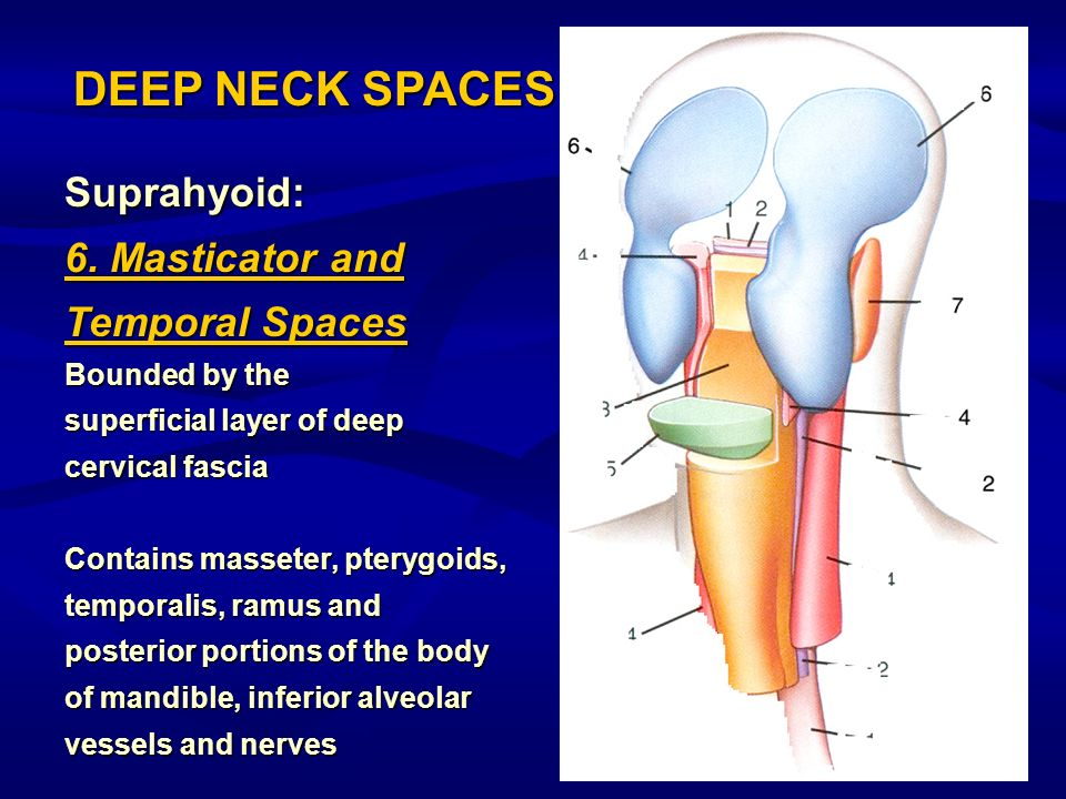 DEEP NECK SPACES Suprahyoid: 6. Masticator and Temporal Spaces