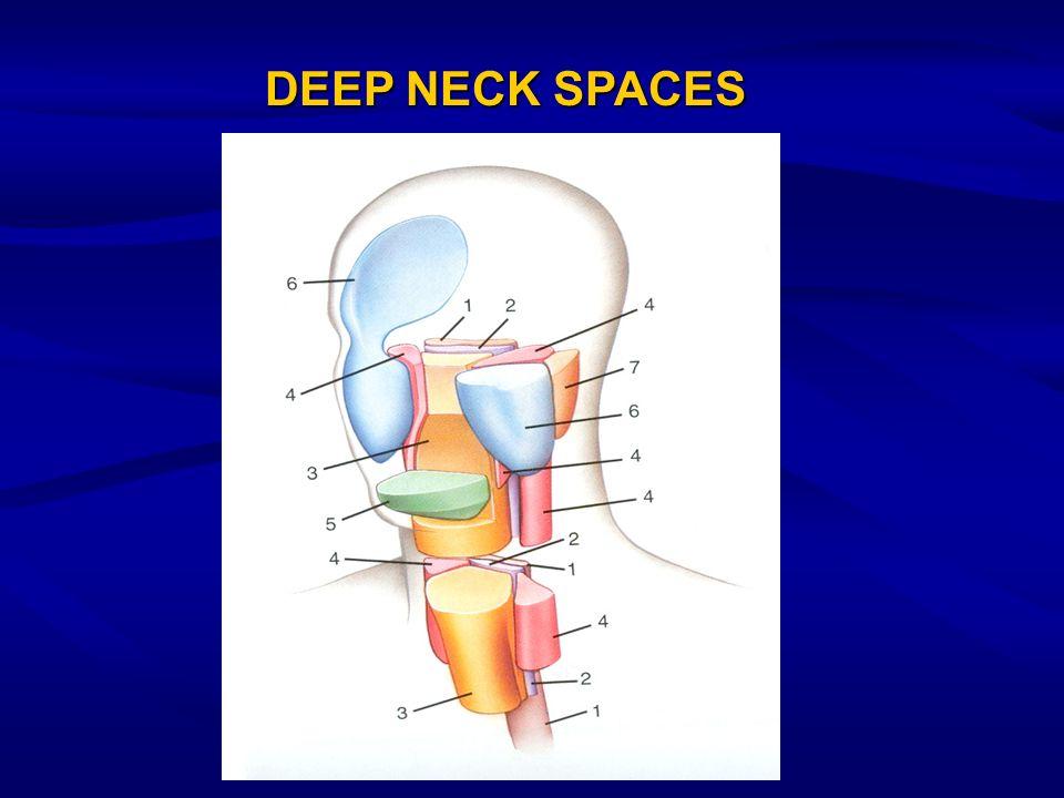 DEEP NECK SPACES