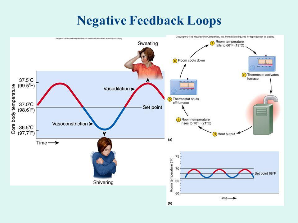 Negative Feedback Loop Definition Anatomy ✓ The Stickers