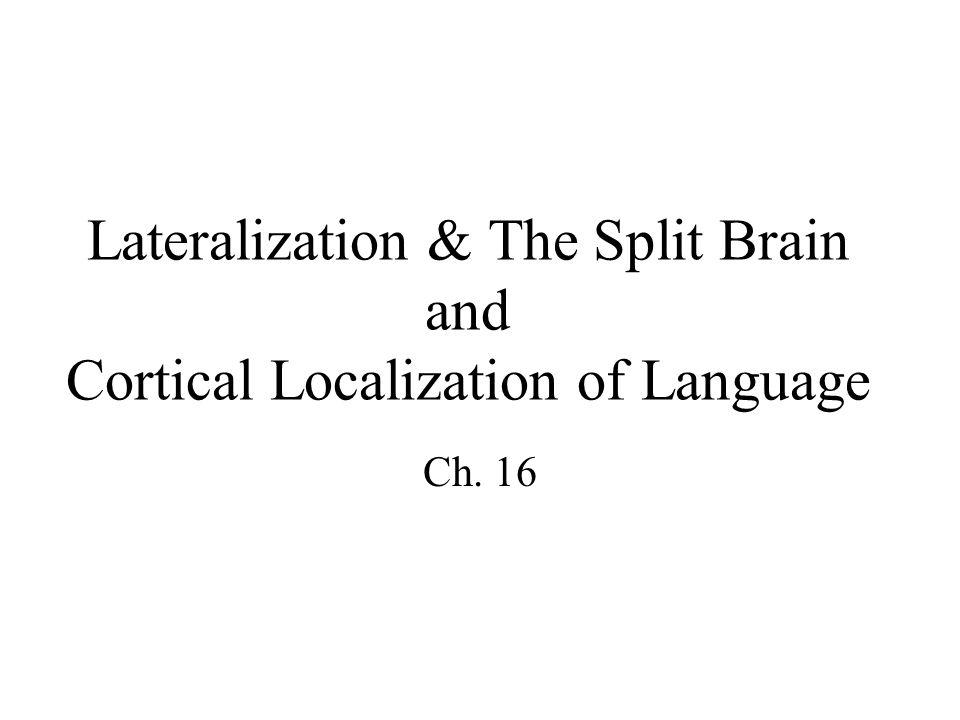 the behaviour of split brain patients The canonical view of split-brain patients is that splitting the brain also splits 3 donders institute for brain, cognition and behaviour, radboud university.