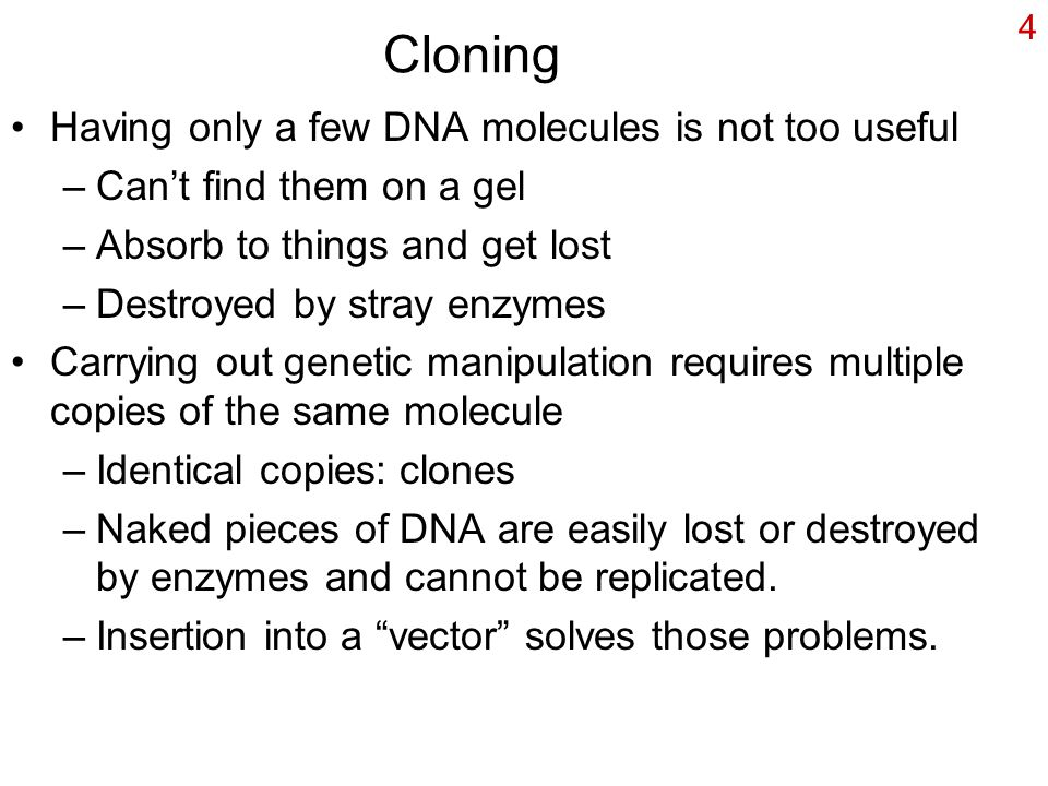 Primer on Ethics and Human Cloning