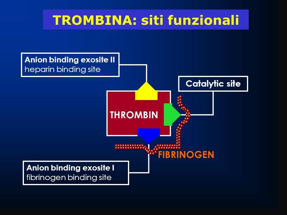 TROMBINA: siti funzionali