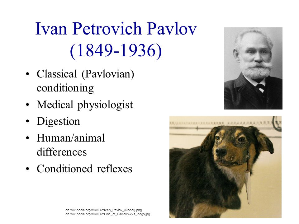"""ivan pavlov digestion and conditioning essay Conditioning is most often associated is ivan pavlov in fact  the """"classic""""  classical conditioning experiment conducted by pavlov goes as follows: a dog is."""