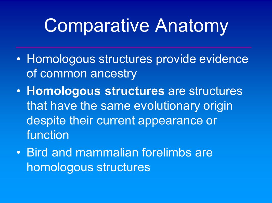 Beste Evidence From Comparative Anatomy Zeitgenössisch - Physiologie ...