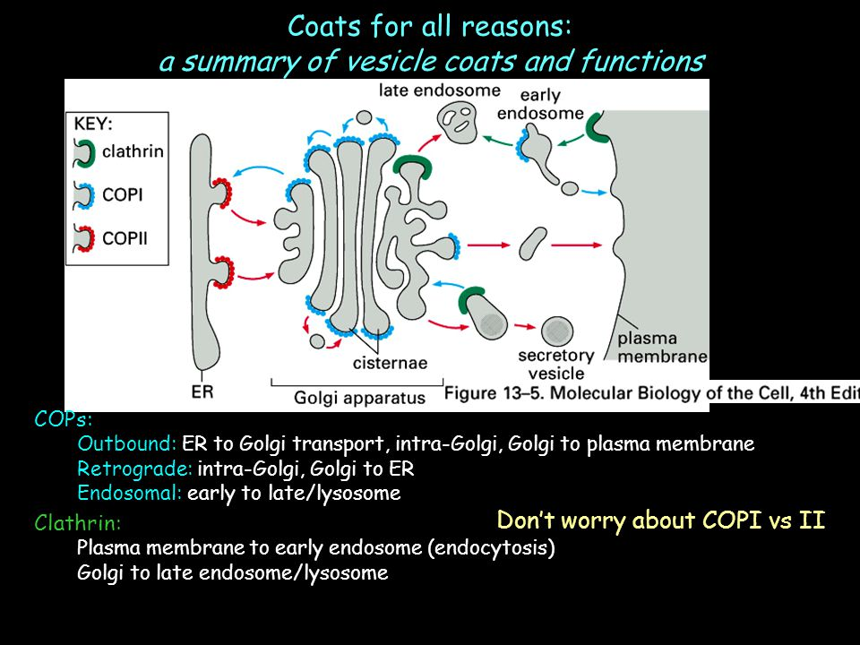 Coats for all reasons: a summary of vesicle coats and functions