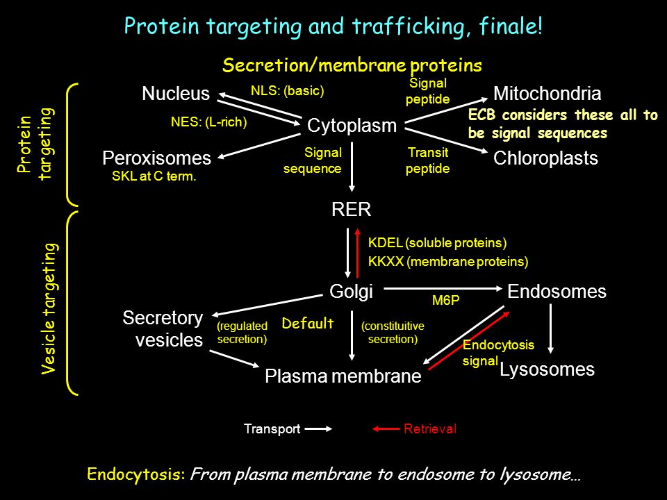 Protein targeting and trafficking, finale!