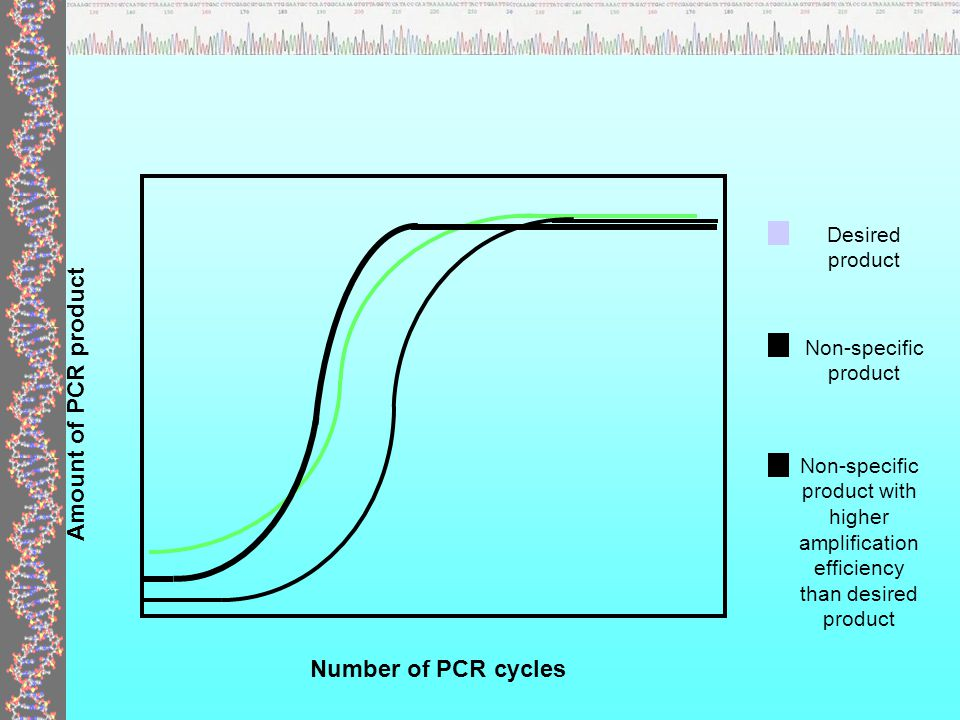 pcr template amount - fish 543 ocean 575 molecular techniques ppt download