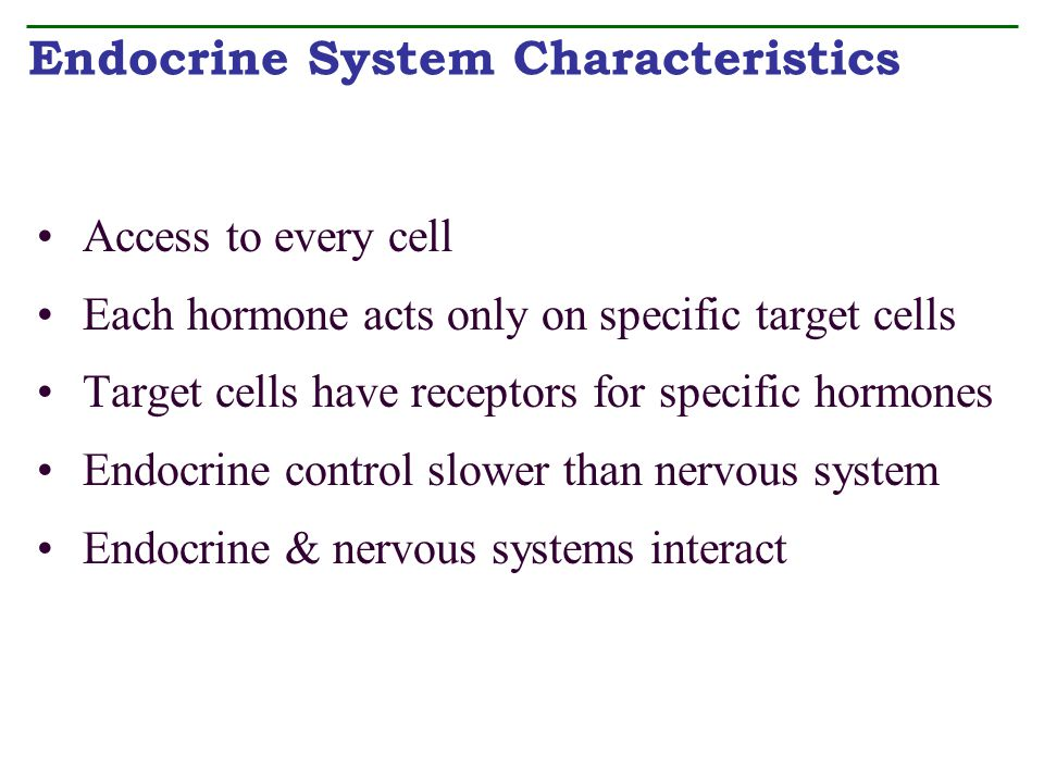 Endocrine System Characteristics