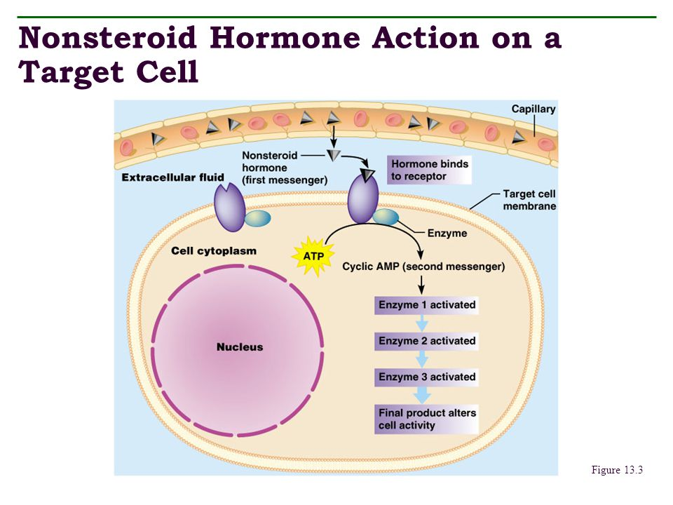 Nonsteroid Hormone Action on a Target Cell