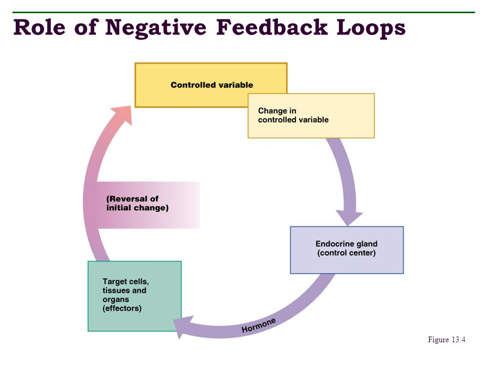 Role of Negative Feedback Loops