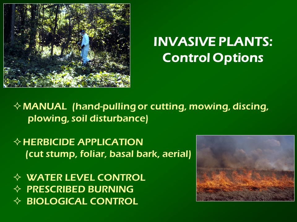 INVASIVE PLANTS: Control Options