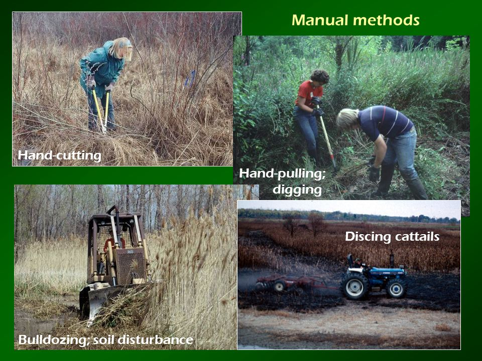 Manual methods Hand-cutting Hand-pulling; digging Discing cattails