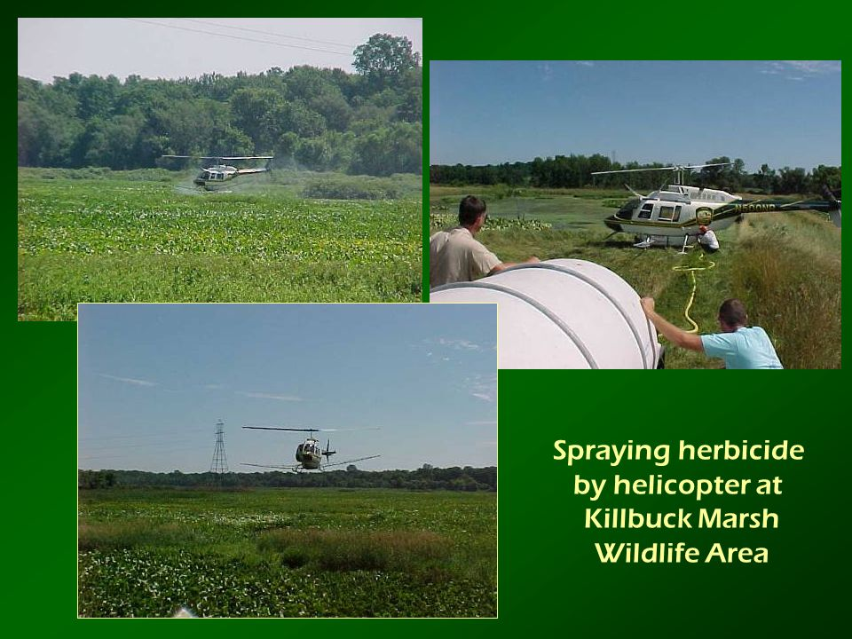 Spraying herbicide by helicopter at Killbuck Marsh Wildlife Area