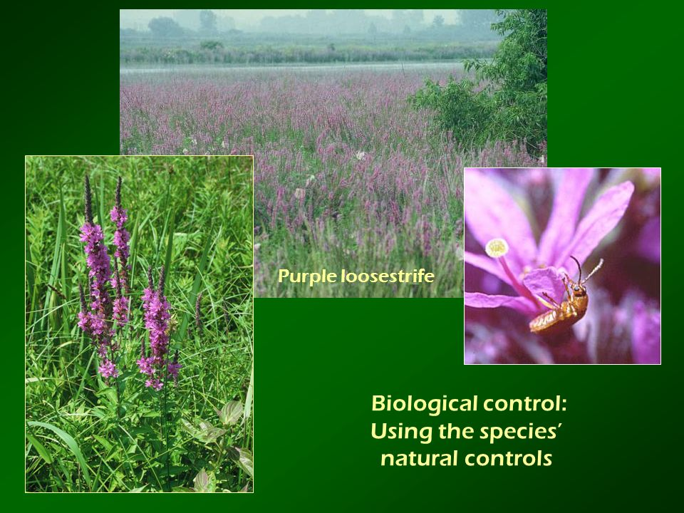 Biological control: Using the species' natural controls