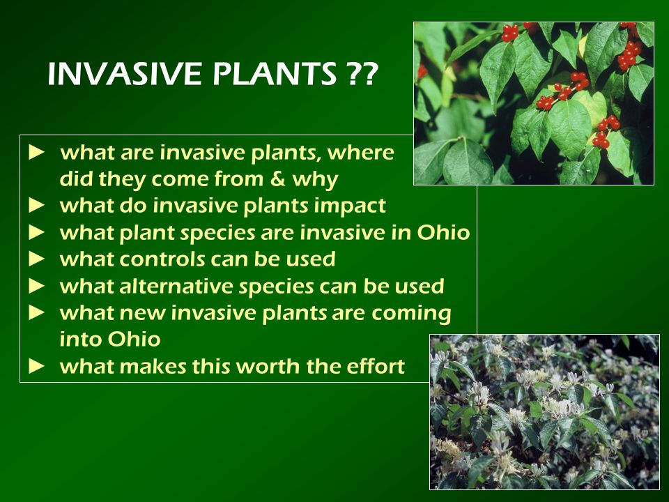 INVASIVE PLANTS ► what are invasive plants, where