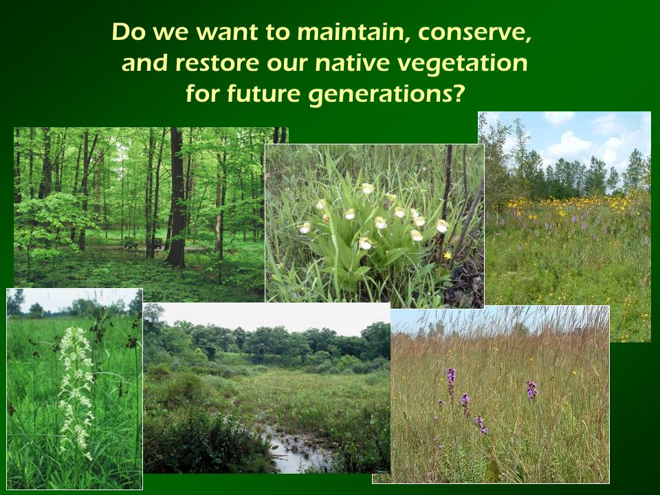 Do we want to maintain, conserve, and restore our native vegetation