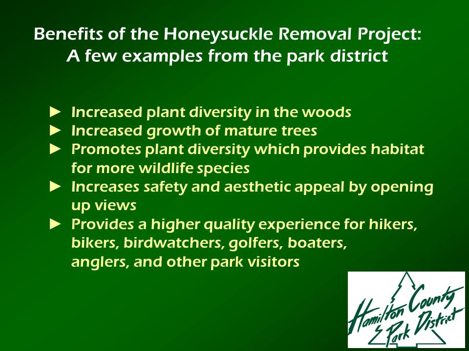 Benefits of the Honeysuckle Removal Project: