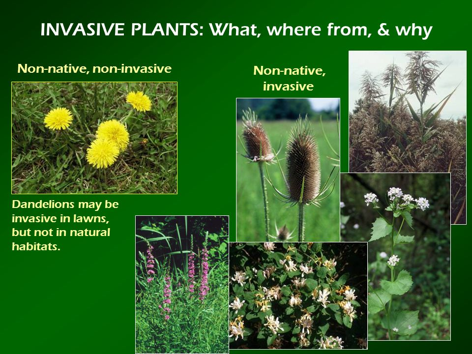 INVASIVE PLANTS: What, where from, & why
