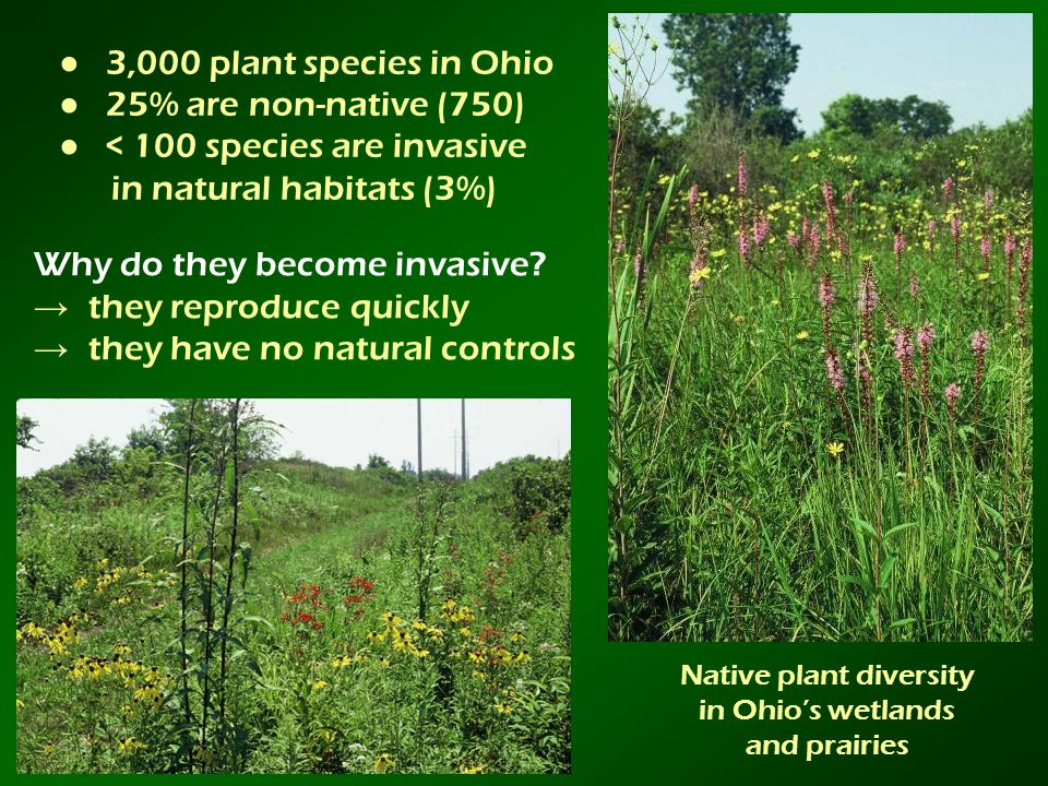 Native plant diversity