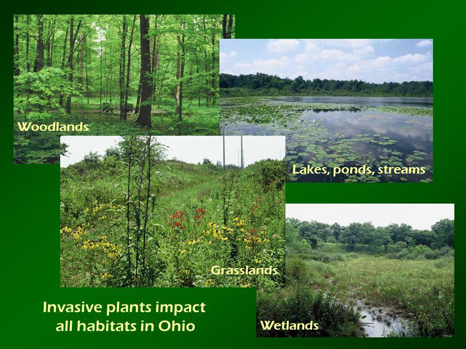 Invasive plants impact