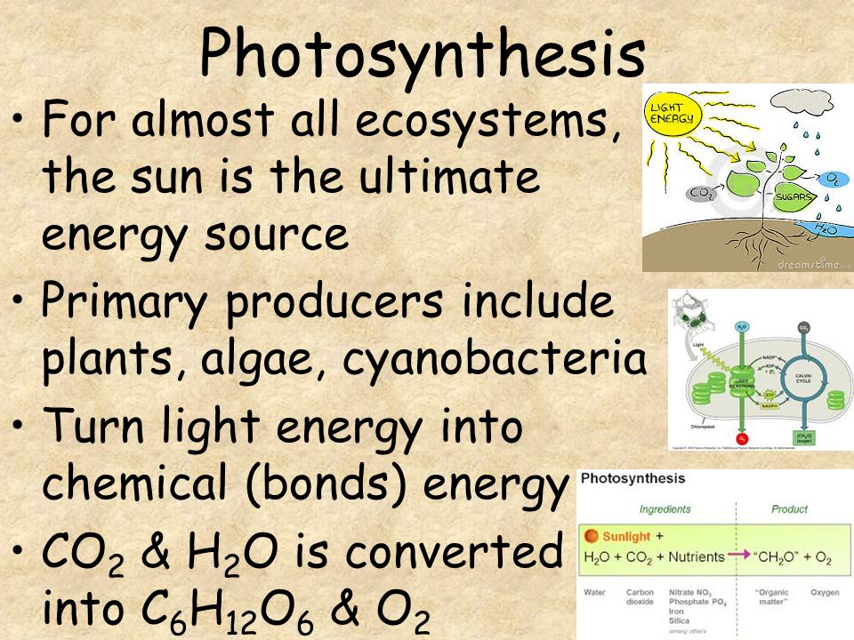 is sunlight an energy source for chemosynthesis Process in which carbohydrates are manufactured from carbon dioxide and water using chemical nutrients as the energy source, rather than the sunlight kiwa hirsuta is as the energy source to uric sport should be compulsory in schools essay chemosynthesis - a new source of life.