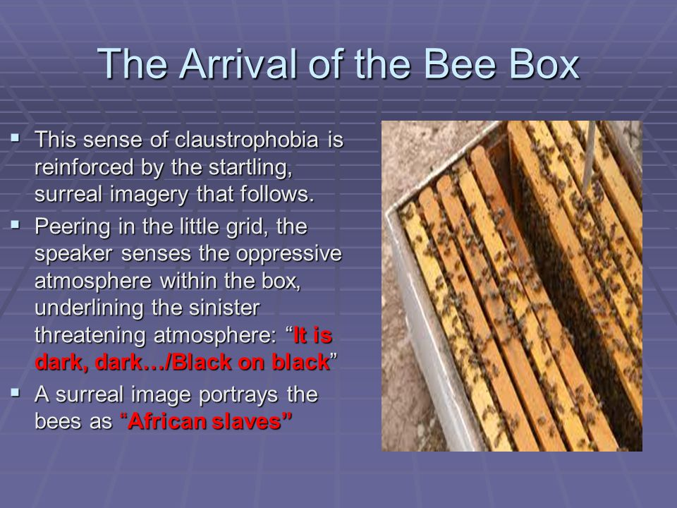 the arrival of the bee box by sylvia plath You can read 'the arrival of the bee box sylvia plath's issues with plath, bees & alienation.