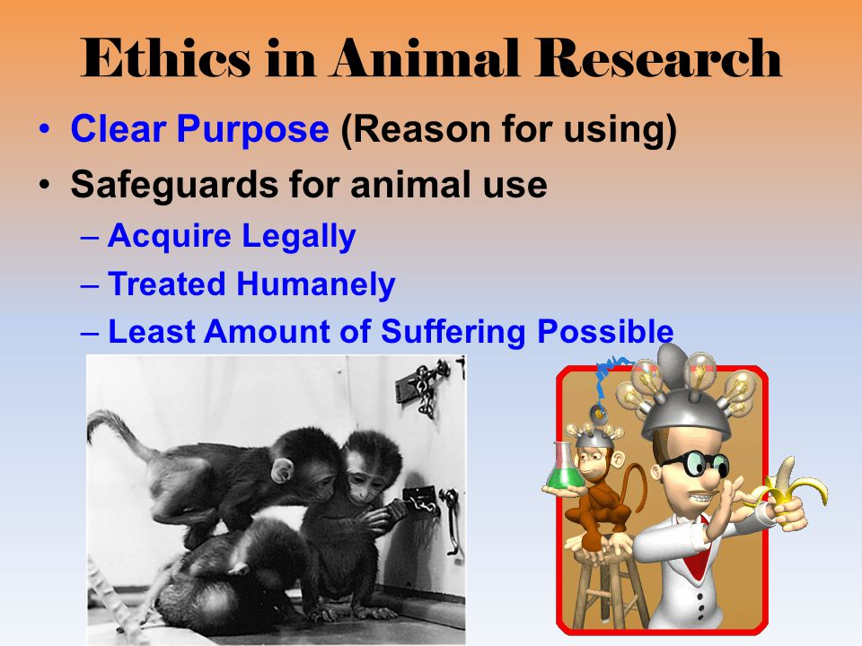 ethics in animal research Blending new voices with more familiar ones, the ethics of animal research breathes new life into an old debate jeremy garrett has shown that it is possible to move beyond polemics and have a productive exchange of ideas about the ethics of using animals in research peter singer ira w decamp professor of bioethics.