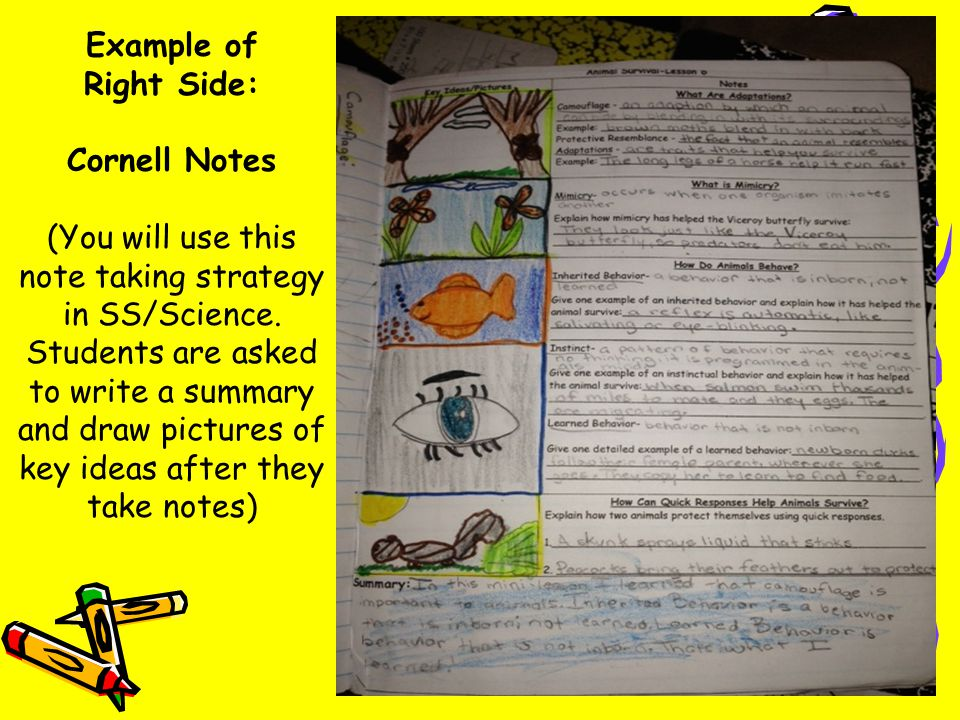 Example of Right Side: Cornell Notes (You will use this note taking strategy in SS/Science.
