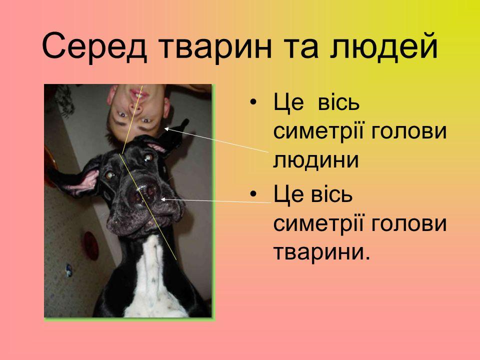 Серед тварин та людей Це вісь симетрії голови людини