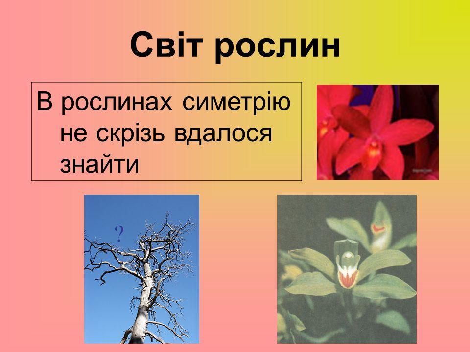 Світ рослин В рослинах симетрію не скрізь вдалося знайти
