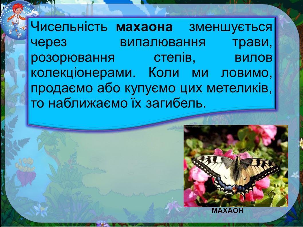 МАХАОН МАХАОН.