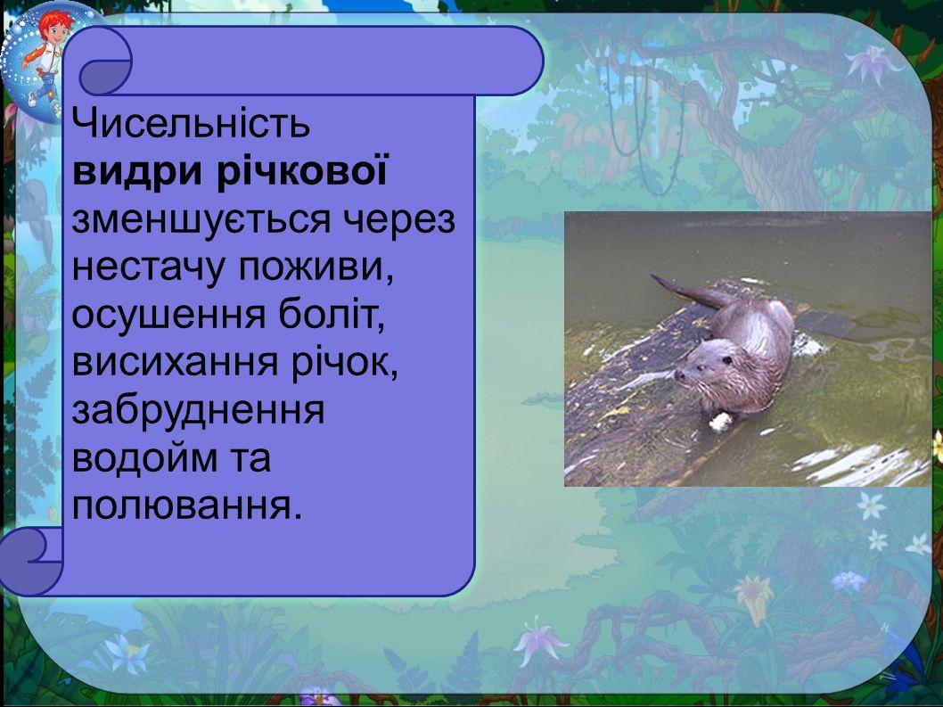 Чисельність видри річкової зменшується через нестачу поживи, осушення боліт, висихання річок, забруднення водойм та полювання.