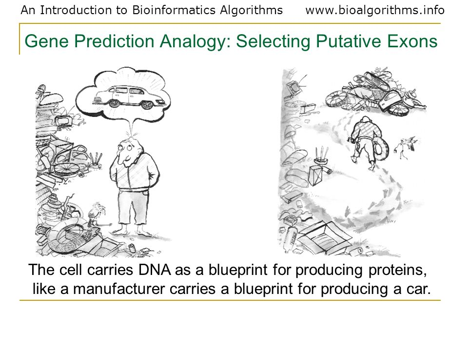 Gene Prediction Analogy: Selecting Putative Exons