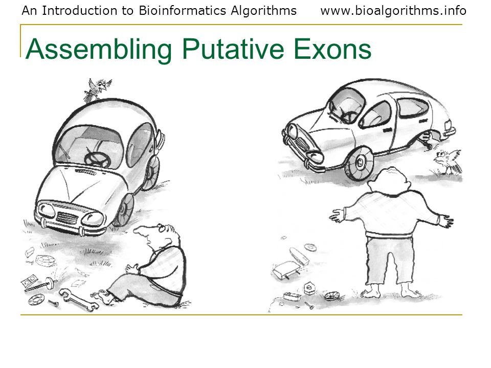 Assembling Putative Exons