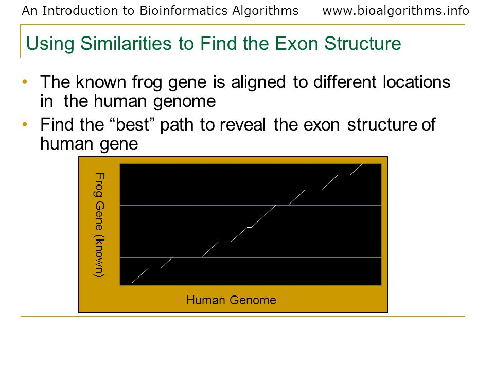 Using Similarities to Find the Exon Structure