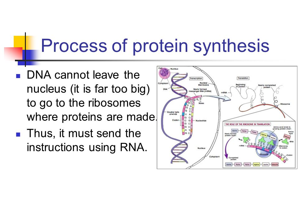 the process of producing mrna from instructions in dna