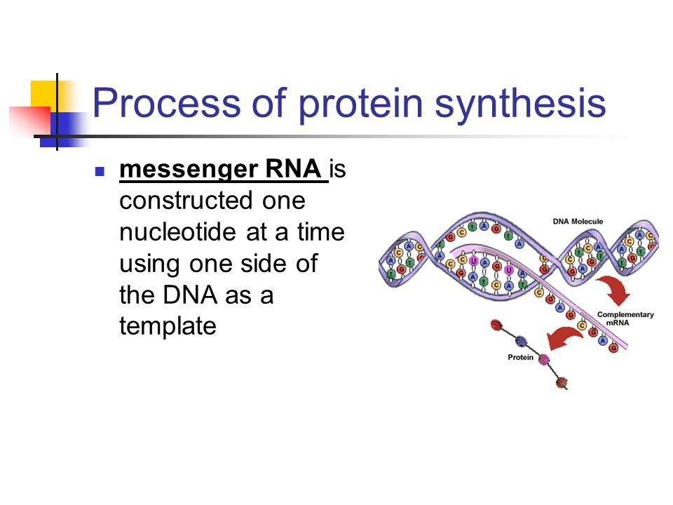 process of protein synthesis Protein synthesis: transcription and translation review central dogma of molecular biology protein synthesis requires two steps: transcription and translation dna contains codes translation is the process where ribosomes synthesize proteins using the mature mrna.