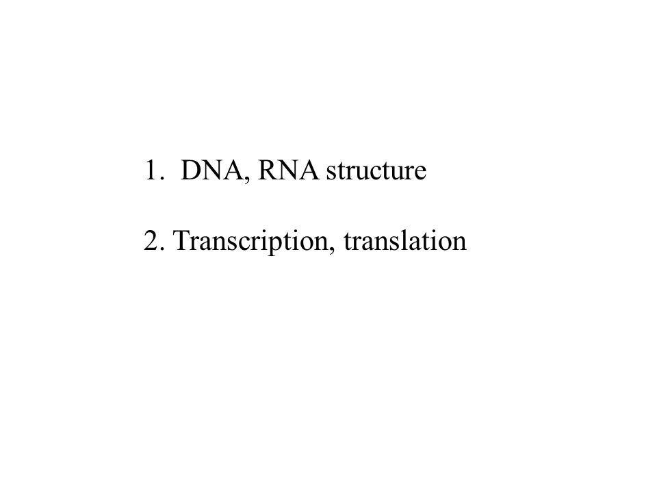 1 Dna Rna Structure 2 Transcription Translation Ppt Video. Dna Rna Structure 2 Transcription Translation. Worksheet. Dna Rna And Protein Synthesis Review Sheet Answers Worksheet At Clickcart.co